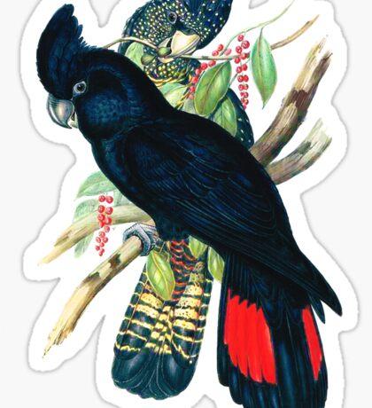 Australian Banksian Black Cockatoo Sticker