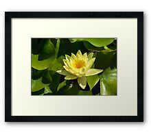 Soft Sunny Yellow - A Waterlily Impression Framed Print