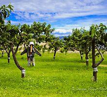 The Man in the Peach Field by Duane Hansford
