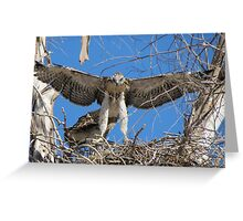 Red-tailed Chick #1 2012 (Wings wide) Greeting Card