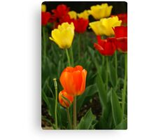 Red + Yellow =   Canvas Print