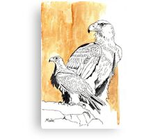 Black Eagle (Aquila verreauxii) Canvas Print