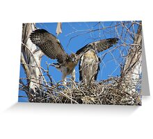 Red-tailed Chick #2 2012 (Wings wide) Greeting Card