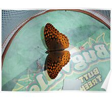 Aphrodite Butterfly Poster