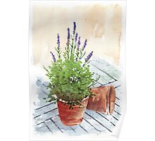 Lavender in a pot Poster