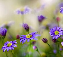 Spring Joy by Mandy Disher
