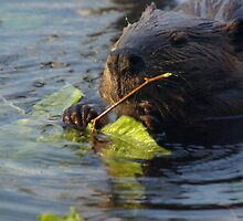 Beaver Caught At Lunchtime by Molly  Kinsey