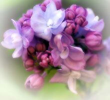 Dreams Of Lilac Time.... by Sharon House