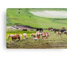 horses graze in the rolling green hills with trees Photographed in Umbria, Italy Metal Print