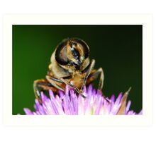hoverfly with thistle Art Print