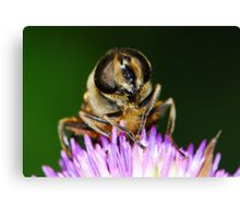 hoverfly with thistle Canvas Print