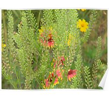 Peppergrass in the Flowers Poster