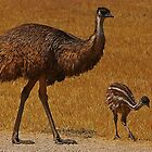 Emu with Chick by Peter Edwards