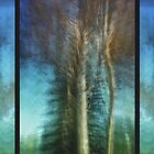 Ghost Gums in Motion by Adriana Glackin