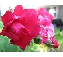 Kennebunk Beach Rose Photographic Print