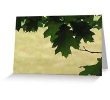 Maine Woods Greeting Card