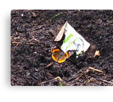 The Red Admiral Headlines..Millions invade Eastern Canada while the economy saps the trees Canvas Print