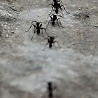 Ants Marching on the Stones by Darkwing717