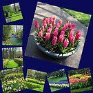 Keukenhof Collage featuring Pink Hyacinths by BlueMoonRose
