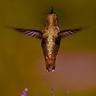 DREAMING OF FLYING LIKE A HUMMINGBIRD by RoseMarie747