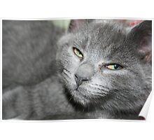 A bit of Kitten attitude! Poster