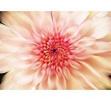 Chrysanthemum Blur Photographic Print