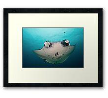 Manta Ray Framed Print