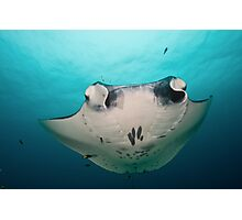 Manta Ray Photographic Print