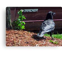 Tracker Bird Canvas Print
