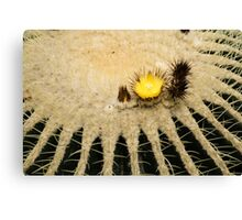 Fascinating Cactus Bloom - Soft and Fragile Among the Thorns Canvas Print