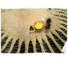 Fascinating Cactus Bloom - Soft and Fragile Among the Thorns Poster