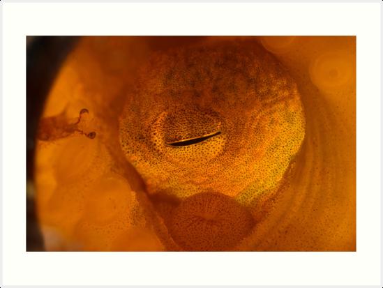 Bottled Octopus by MattTworkowski