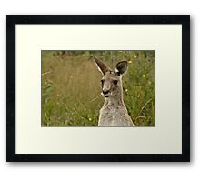 Chewing on a blade of grass Framed Print