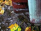 Rain Gutter by Nevermind the Camera Photography