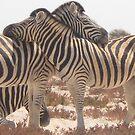 Zebra Love by Anita Deppe