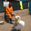 Pelican in Walvis Bay by Anita Deppe