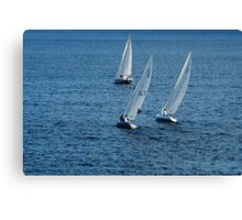 Into The Wind - Crisp White Sails On a Caribbean Blue Canvas Print