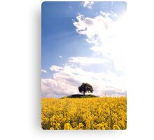 Rape field Canvas Print