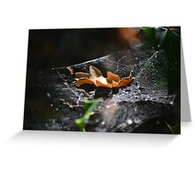 Leaf on Cobweb Greeting Card. Different and Quirky Photograph Greeting Card