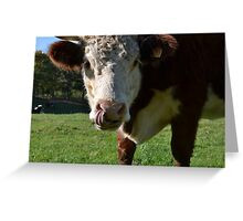 Curious Cow Greeting Card Greeting Card