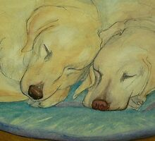 Two Labradors are better than one by ajnorthover
