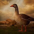 Goose Portrait by ajgosling