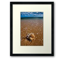 Mollusca house embraced by the Sea  Framed Print