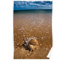 Mollusca house embraced by the Sea  Poster