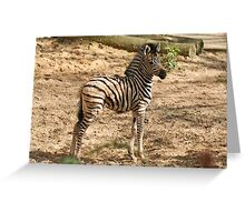 Baby Chapman Zebra Greeting Card