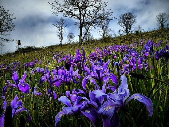 Deep Feelings by Charles & Patricia   Harkins ~ Picture Oregon