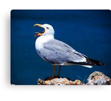 Yawning Seagull Canvas Print