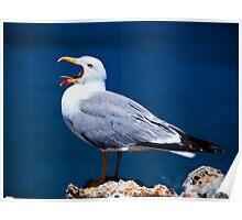 Yawning Seagull Poster