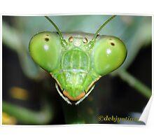 Close to a grasshopper. Poster