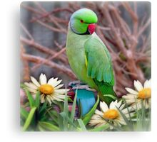 Pretty Please - (Parakeet) Canvas Print